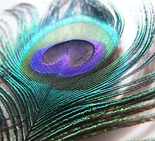 glowing peacock feather by Demelza Snell