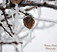 Captured in Ice by Pietrina Elena Photography