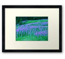 Monet....Unleashed and Wild ! Framed Print