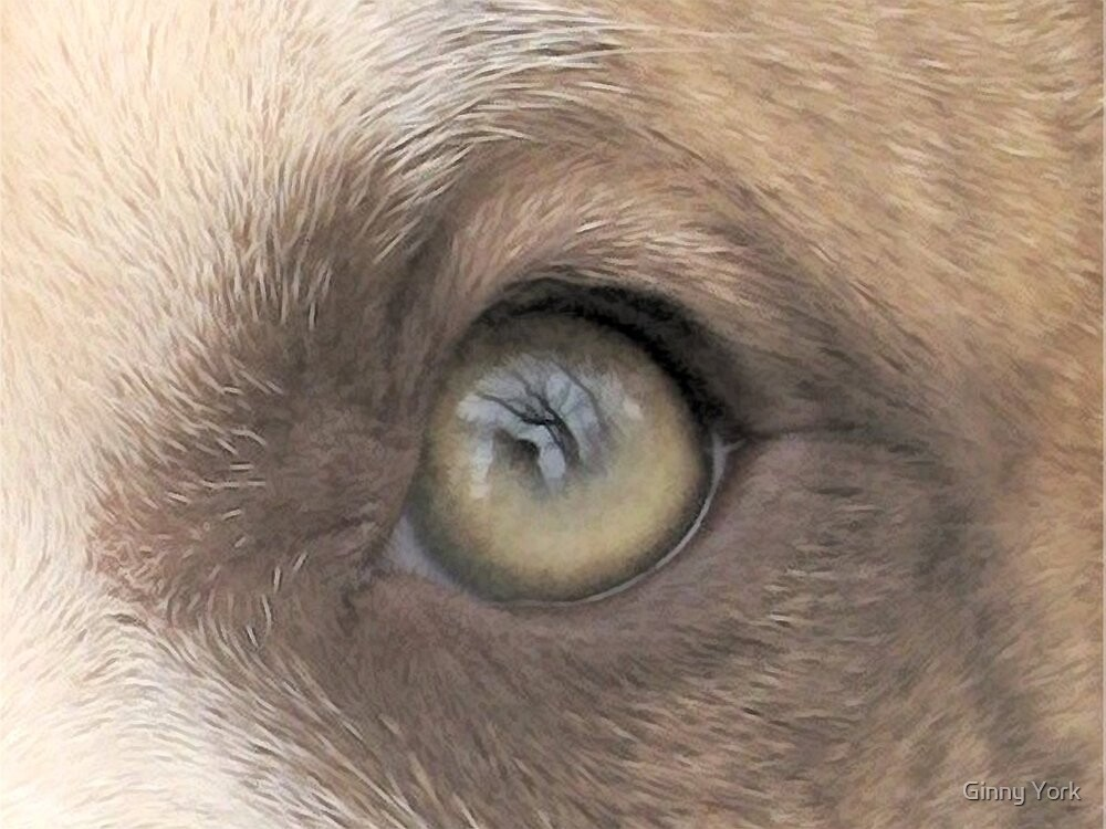A Dogs Eye View - A Look Inside - Original by Ginny York
