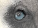 A Dogs Eye View - A Look Inside by Ginny York