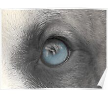 A Dogs Eye View - A Look Inside Poster