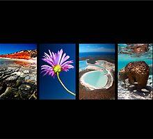 Sensational Shark Bay - Blank Card by wildimagenation