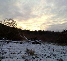 Sun-setting over Raincliffe Meadow by Merice  Ewart-Marshall - LFA