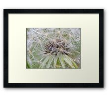 White Seedling Framed Print