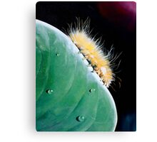"""""""Blondie"""" - oil painting of a caterpillar Canvas Print"""