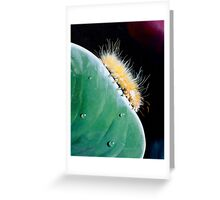 """""""Blondie"""" - oil painting of a caterpillar Greeting Card"""