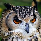 Close Encounter With a Eagle Owl by Hovis