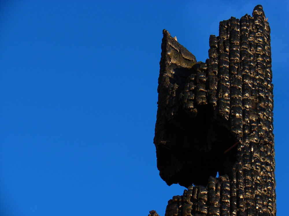 The Dark King's Crown by Honario