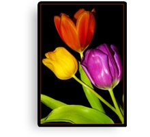 Tulips on Black Canvas Print
