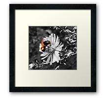 Nectar Thief Framed Print