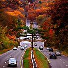 "Autumn on the Merritt  by Christine ""Xine"" Segalas"