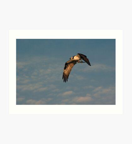 Osprey with Catch Art Print