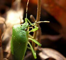Winter Bug by Carla Wick/Jandelle Petters