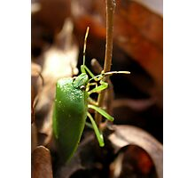 Winter Bug Photographic Print