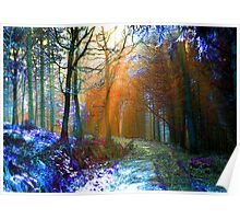 Fairy Wood - Colourful Woodland Poster