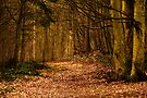 A Walk On The Wild Side by CJTill