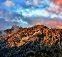 Fire on the Mountain by janice fife