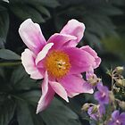 Flower by Wilson Johnson