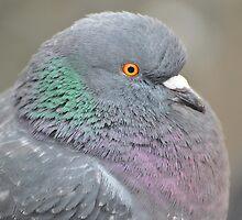 Birds Eye View by Dorothy Thomson