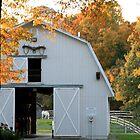 Horse through barn door. by naturalgifts