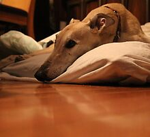 Greyhound Zim by RoyalSamurai