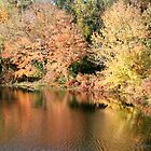 Foliage on pond by naturalgifts