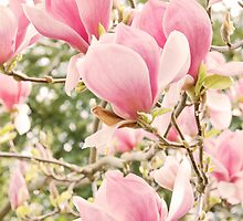 Pink Magnolia by Lynnette Peizer