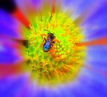 Nature Into Art ~  Bee and Daisy  by BLemley