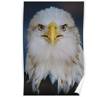 American Bald Eagle Up Close Poster