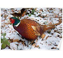 The Stalking Pheasant Poster