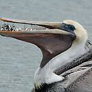 Pelican's Tiny Fish Meal by Joe Jennelle
