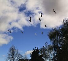 Birds Flying High, You Know How I Feel.... by Renee D. Miranda