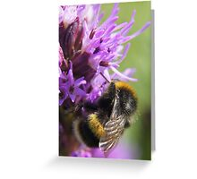 Buzz Greeting Card