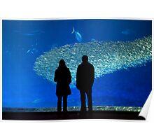 Window into the Deep Blue (Monterey Bay Aquarium, California) Poster