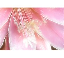 Pretty in pink (Fractalius) Photographic Print