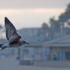 Free (Huntington Beach, California) by Brendon Perkins