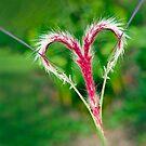 Love by Johan Larson