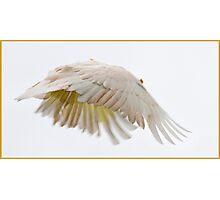 Flying Cockatoo Photographic Print