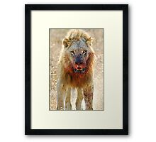 Majingilane - Male Lion - Hyena Intimidation Framed Print
