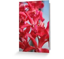 Red Orchid Flower Greeting Card
