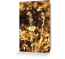 Dry plant Greeting Card