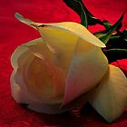 _ROSE_ by RoseMarie747