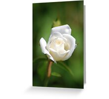 White rosebud Greeting Card
