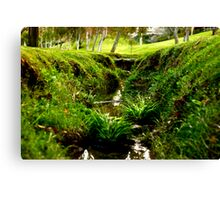 Tiny Grass Valley Canvas Print