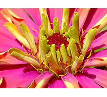 A Fiesta of Colour! Photographic Print