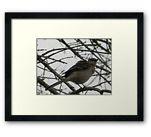 Mockingbird's Comment Framed Print
