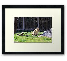The Stalk... Framed Print