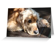 Gemini's Cocker Spaniel Eyes Greeting Card