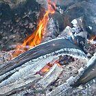 Burnt wood  by birchk
